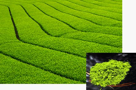 抹茶畑と粉